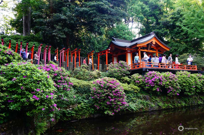 sanctuaire-nezu-tokyo