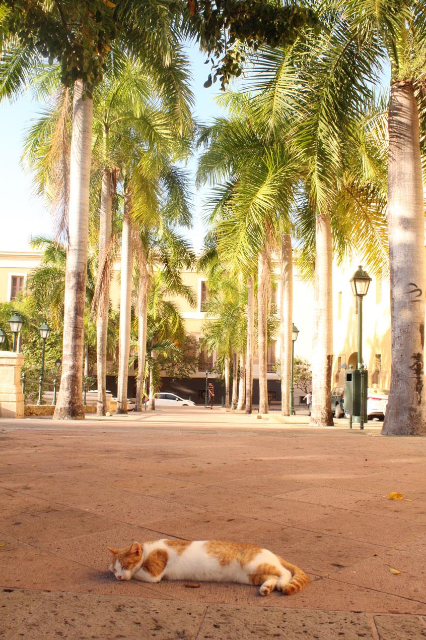 puerto-rico-entre-copines-calles-2