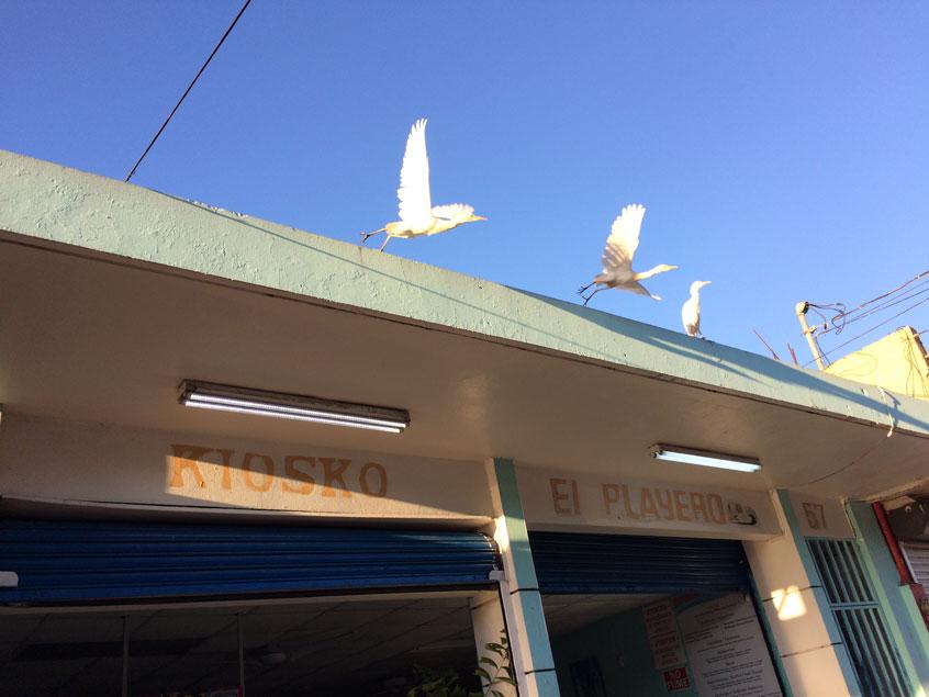 puerto-rico-entre-copines-kioskos