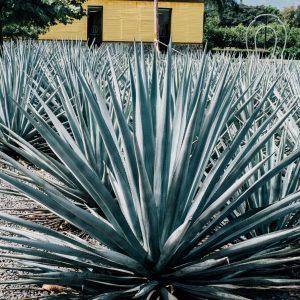 mexique-visiter-tequila-entre-copines-3